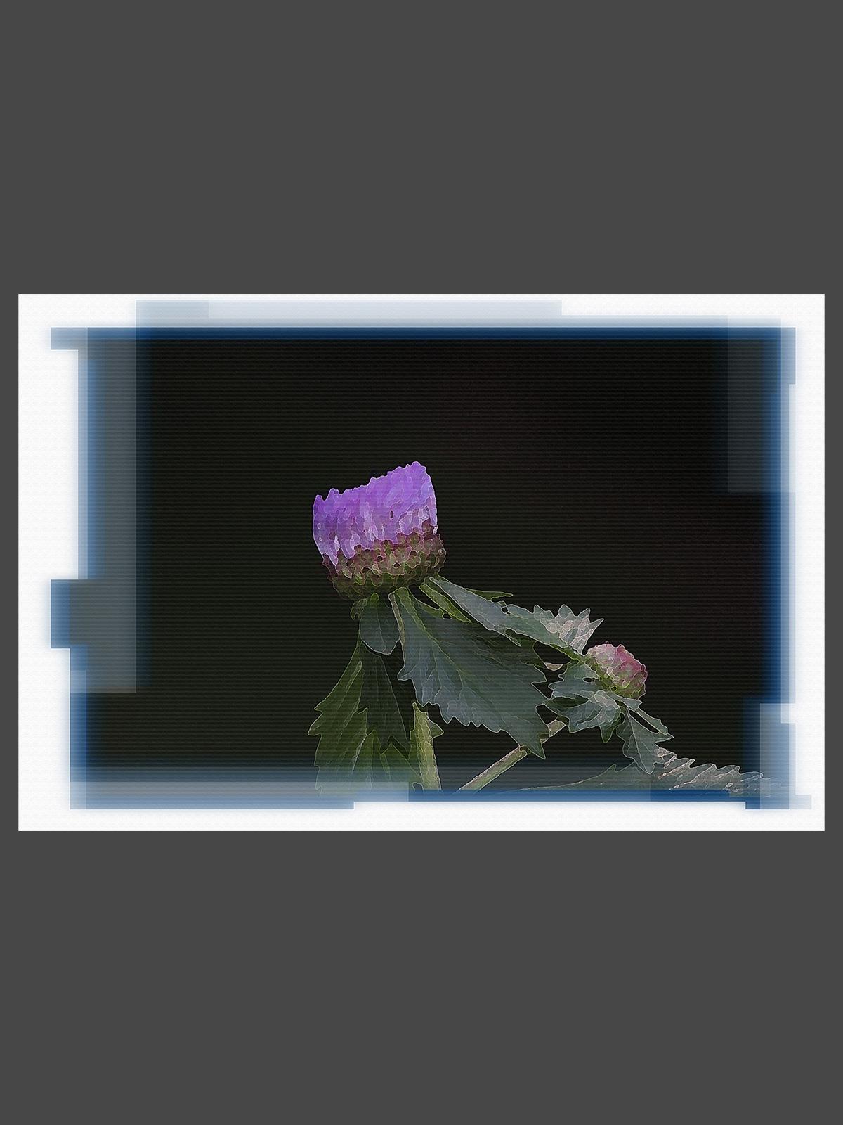 FL-PT_0088